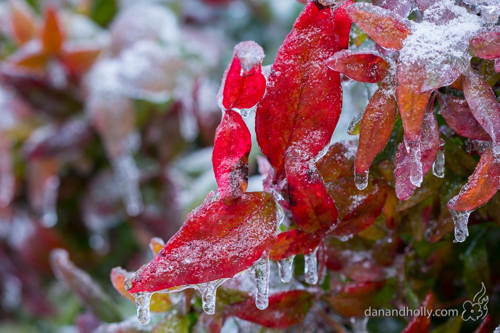 POTW: Icy Leaves