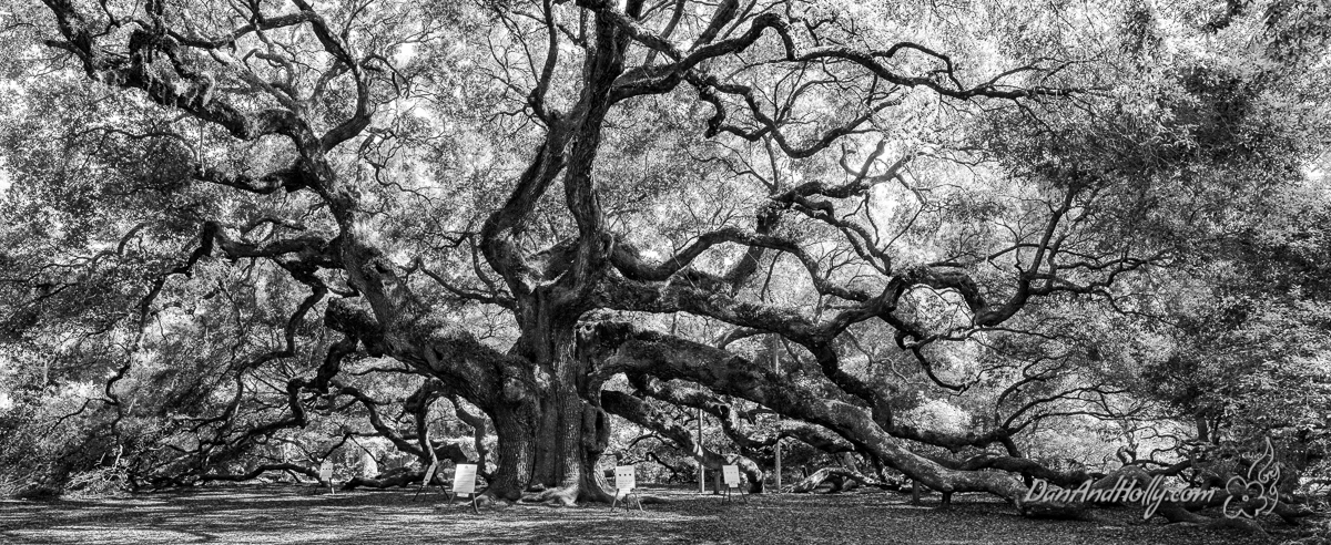 Charleston's Angel Oak Tree