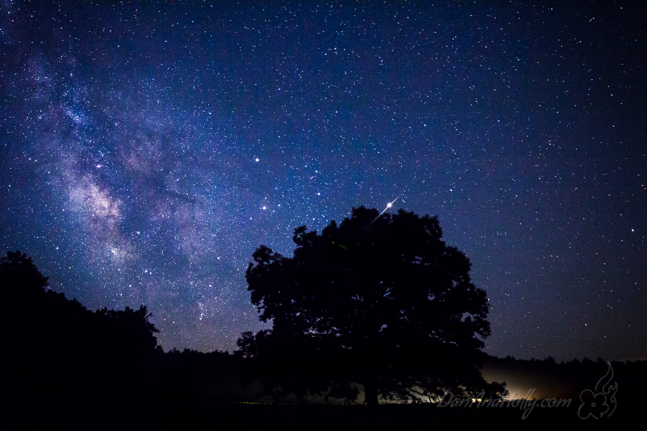 """""""The Tree"""", the Milky Way, and a wrecker"""
